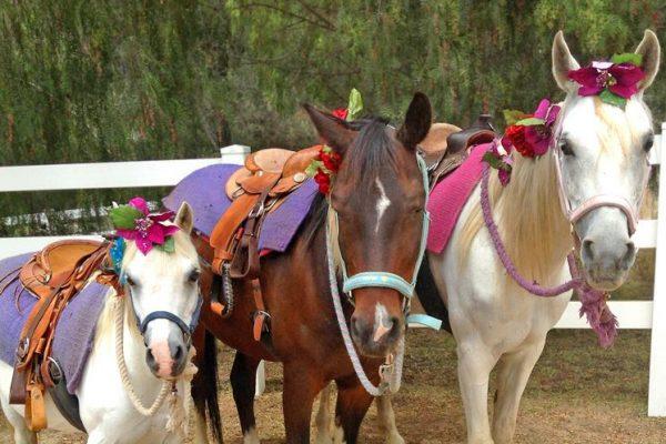 Pony_Rides_Horseback_Riding_San_Diego